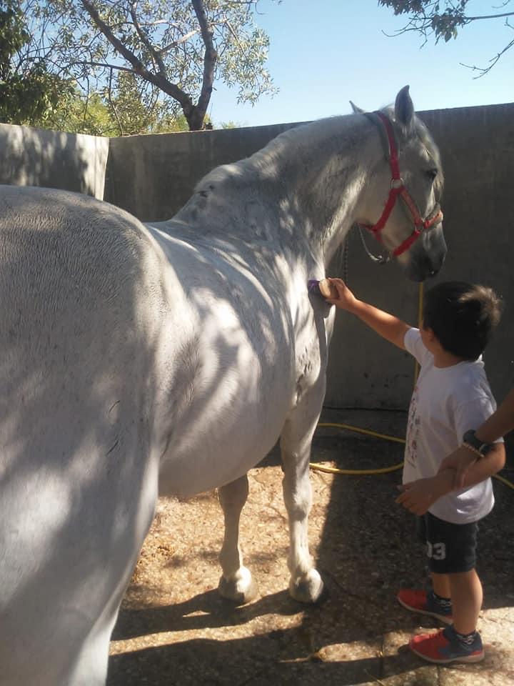 Foto caballo